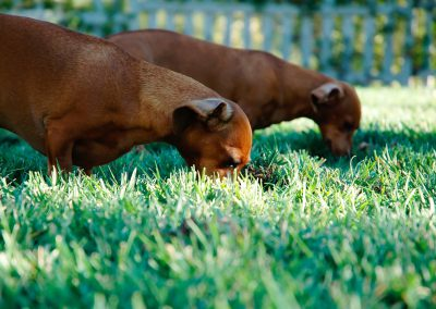 animals-dogs-eating-876